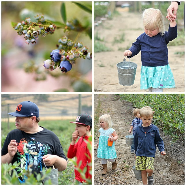 Exploring blueberry fields
