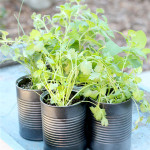 Homemade Herb Planters Made From Cans