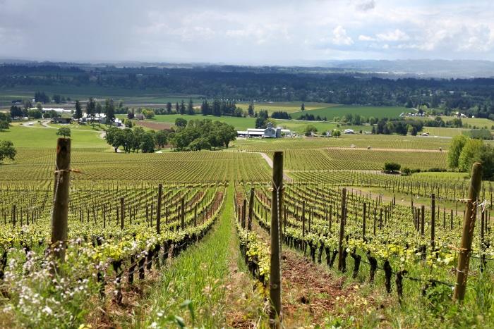 stoller family vineyard