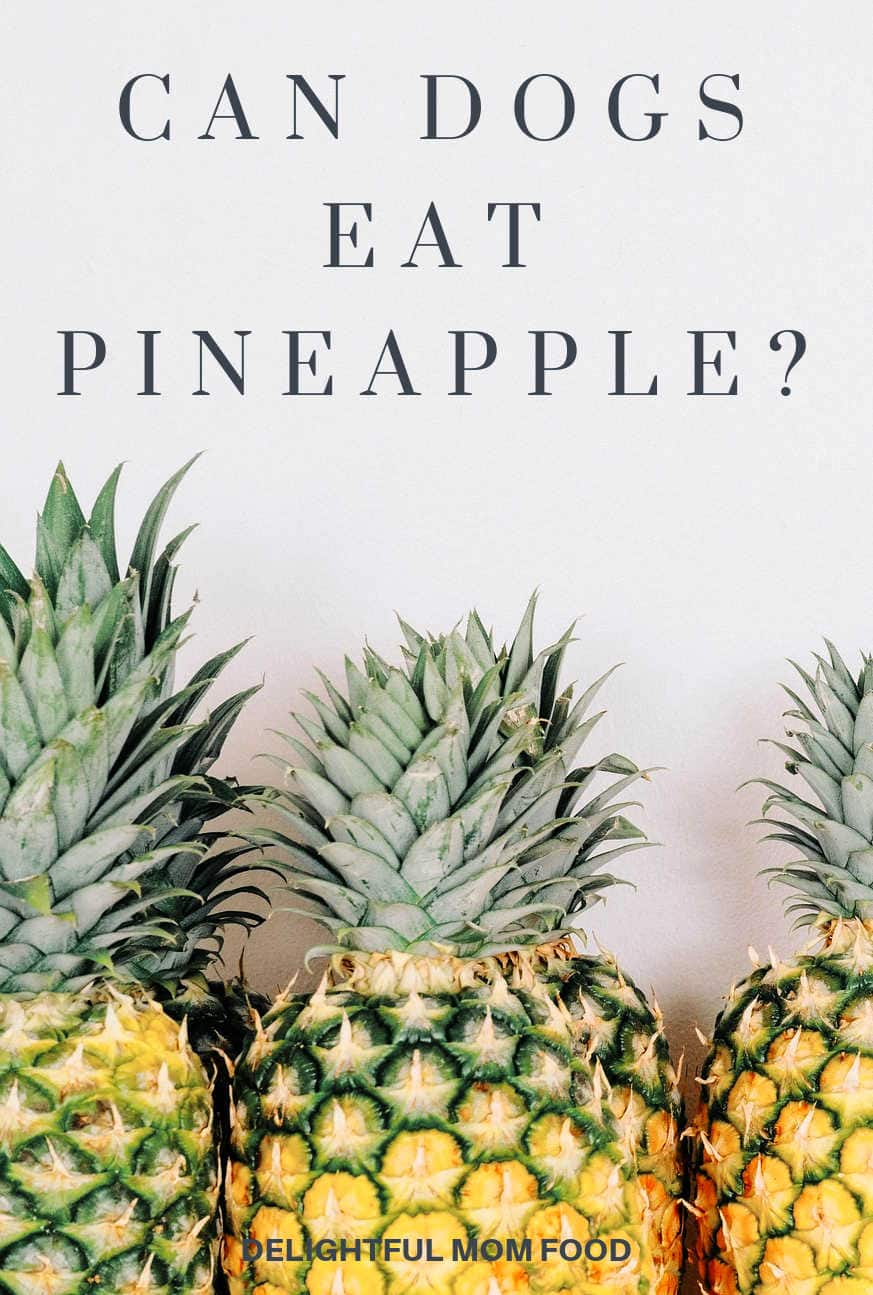 can dogs eat pineapple fruit